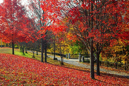 New England Autumn  by Alberto  DeJesus