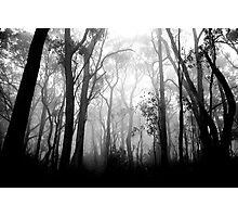 Woods 1 Photographic Print