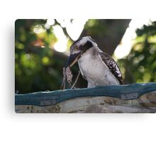 Kookaburras Breakfast -1 0f a series of 10 pictures Bowen North Queensland Canvas Print