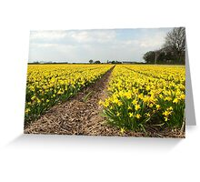 Flowering Daffodils Fields Greeting Card