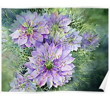Love in a Mist (Nigella) Poster