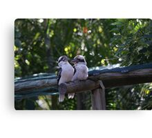 Kookaburras Breakfast - 5 0f a series of 10 pictures Bowen North Queensland Canvas Print