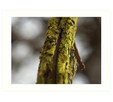 Moss covered branch Art Print