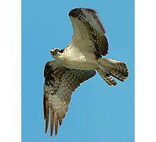 Osprey Eye to Eye Photographic Print