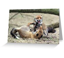 Red Foxes Fighting Greeting Card