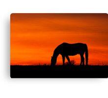 Horse at Sunset  Buckinghamshire  UK Canvas Print