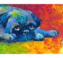 Impressionistic Pug dog portrait Svetlana Novikova Photographic Print
