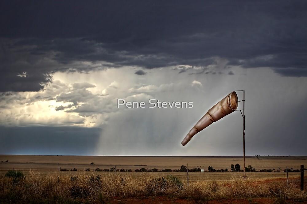 Dirty Sock by Pene Stevens