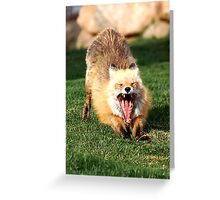 After the Nap Red Fox Stretch Greeting Card