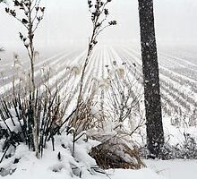 Snowy day in Arkansas by Susan Blevins