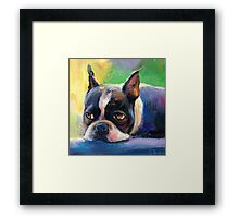 Boston Terrier pensive Dog painting Svetlana Novikova Framed Print