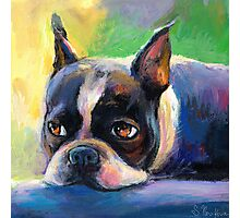 Boston Terrier pensive Dog painting Svetlana Novikova Photographic Print