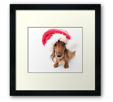 Sweet red-haired dachshund wearing Santa hat for Christmas Framed Print