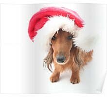 Sweet red-haired dachshund wearing Santa hat for Christmas Poster