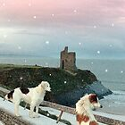 winter beach and castle view with dogs and snow falling by morrbyte
