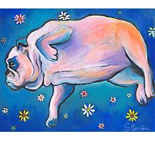 Whimsical Bulldog dreaming painting Svetlana Novikova Photographic Print