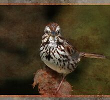 Little Song Sparrow by swaby