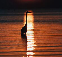 """Heron Sunset"" - sunset with great blue heron in front by John Hartung"