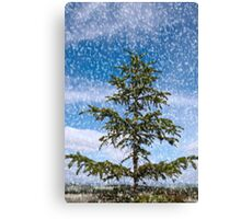 a cold snap Canvas Print