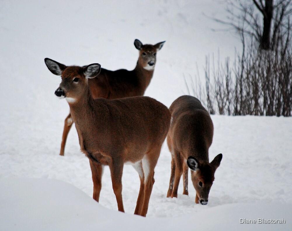Deer in the Snow by Diane Blastorah