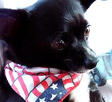 LAZARUS ~ Little boy Chihuahua by Marjorie Wallace