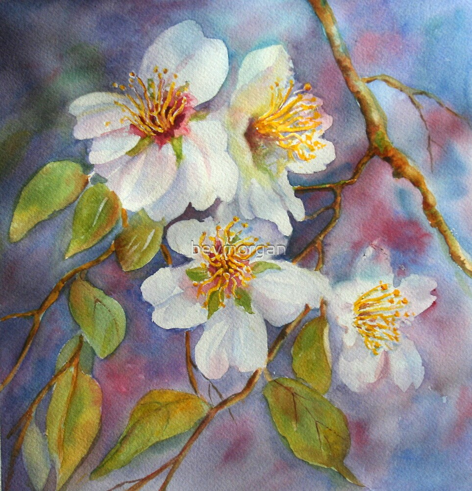 Blossom Time  (early spring) by bevmorgan