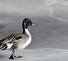 Duckwalk by Mitchell Tillison