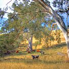 Among the Gum Trees - Mount Torrens, Adelaide Hills, SA by Mark Richards