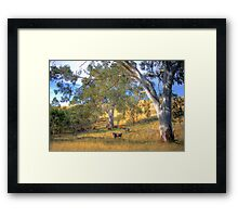 Among the Gum Trees - Mount Torrens, Adelaide Hills, SA Framed Print