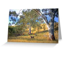 Among the Gum Trees - Mount Torrens, Adelaide Hills, SA Greeting Card