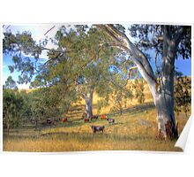 Among the Gum Trees - Mount Torrens, Adelaide Hills, SA Poster