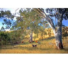 Among the Gum Trees - Mount Torrens, Adelaide Hills, SA Photographic Print