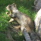 Rock Squirrel ~ Darn! Where's my nuts? by Kimberly P-Chadwick