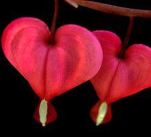 2 of Hearts by Jamie Lee