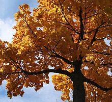 AutumnTree by RosiLorz