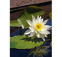 Lily I - Denver Botanic Gardens Photographic Print