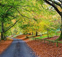Mote Park in Autumn by Sue Martin