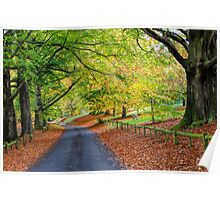 Mote Park in Autumn Poster