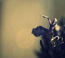 Rosemary  by Joshua Greiner