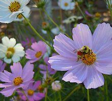 Bee Mine- Old Colorado City, Colorado by Marijane  Moyer