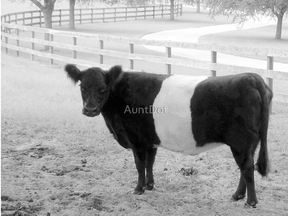 Oreo Cookie Cow by AuntDot