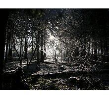 Wintery Woods Photographic Print