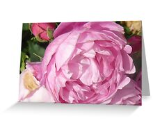 Pink Flower at Osbourne House Greeting Card