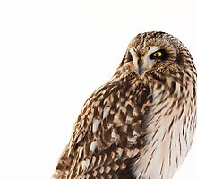 Fierce Lookin Short Eared Owl 2 by Jean-Paul Fournier