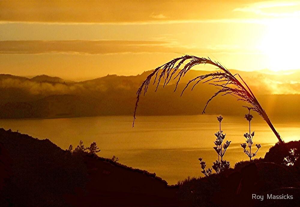 A golden dawn. by Roy  Massicks