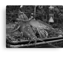 Lobsterscape - black and white Canvas Print