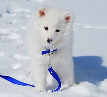 Sasha The Snow Dog by KevinsView