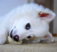 Cute Puppy by KevinsView