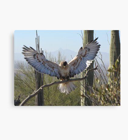 Ferruginous Hawk ~ It's Good!!!! Canvas Print