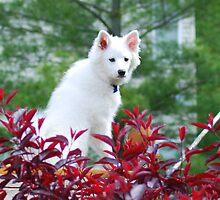 Backyard Sasha Dog by KevinsView